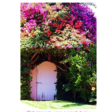 105 Pcs Climbing Bougainvillea Bonsai, Potted Flower Garden Plant, Budding Rate 95%, Floriferous Hardy Plant (Mixed Colors)