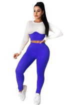 Seksi İki Parçalı Kontrast Bodycon Kırpma Üst ve Yüksek Bel Pantolon Seti