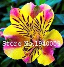 100 pcs Rare Peruvian Lily Alstroemeria Bonsai Plants Mix-Color Beautiful Lilies Flower for Home & Garden Flowers Plants