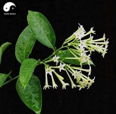 Cordate Telosma Tree Semente 60pcs Plant Tuberose Tree for Ye Lai Xian