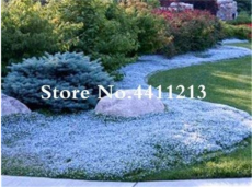 Hot Sale! 200 Pcs/Bag Rock Cress Flower Aubrieta Cultorum Rare Purple Ground Cover Rock Cress Flower Bonsai Home Garden Plant - (Color: 10)