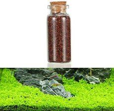 BangBang Plant Seed Aquarium Fish Tank Plants Prospects Grass Seed Grass Landscaping Decoration (1Pc: Size L)