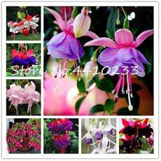 100 Pcs Double Petals Fuchsia Bonsai Bell Flower Lantern Begonia Potted Flower Hanging Plants Semillas De Flores DIY Home Garden - (Color: Mix)