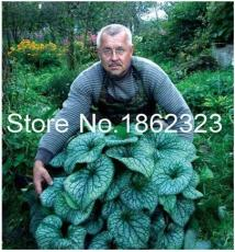 200PCS Colorful Hosta Flores Indoor Bonai Seeds