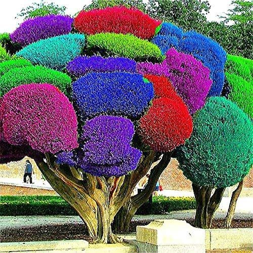 50pcs Rainbow Pine Tree Plants Japanese Bonsai Perennial Pinus Thunbergii plantas Outdoor Garden Giant Tree - (Color: Multi-Colored)
