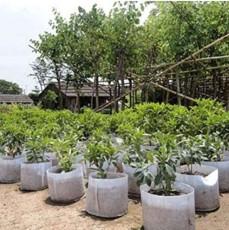 Fabrics Garden Nursery Pots Seedling-Raising Bags Fabric Pots Grow Bags Non-Woven - (Color: 2 Gallon)