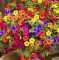 +200pcs Hanging Petunia Mixed Flores Color Waves Beautiful Flowers for Garden Plant Bonsai Flower plantas,#BJLC4O - (Color: 1)