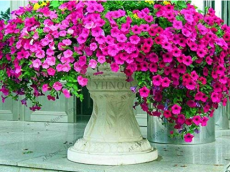 200pcs Hanging Petunia Mixed Flores Color Waves Beautiful Flowers for Garden Plant Bonsai Flower plantas,#BJLC4O - (Color: 10)