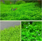 1000Pcs/Pack Aquarium Grass Seeds Aquatic Fish Tank Decor Water Plants Seeds