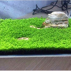 Aquarium Plant Aquarium Water Seed Easy Growing Plant Grass Seed Fish Tank Lawn Decor - (Color: Clover)