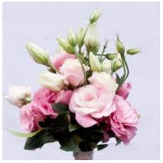 100PCS Eustoma Grandiflorum Seeds Water Pink Double Flowers Hybrid