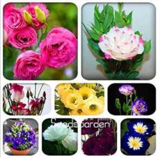 100PCS Eustoma Bonsai Seeds Mixed Colors Bonsai Perennial Flowering Plants