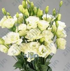200PCS Greenish White Eustoma Grandiflorum Seeds Home Cut Flower Seeds