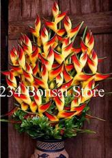 100PCS Heliconia Seeds Indoor Cut Plants