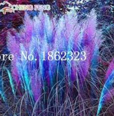 300PCS Pampas Grass Seeds Purplish Red Ornamental Plants