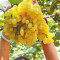 100PCS Golden Green Sweet Grape Organic Seeds