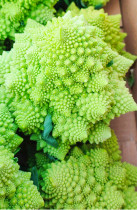 100PCS Roman Broccoli Seeds Vegetables