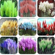 200PCS Pampas Grass Seeds Mixed 9 Colors