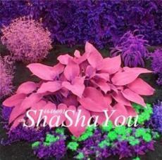 200PCS Hosta Seeds - Rose Pink Leaves