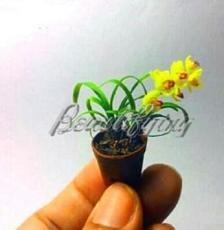 100PCS Phalaenopsis Orchid Seeds - Mini Type Yellow Flowers