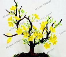 10PCS Yellow Arabian Jasmine Seeds