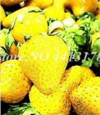 300PCS Giant Strawberry Seeds - Yellow Color