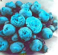 10PCS Paeonia Lactiflora Seeds - Sky Blue Double Flowers