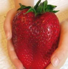 600PCS Heirloom Super Giant Japan Red Strawberry Organic Seeds