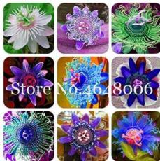 100PCS Passiflora Fruits Seeds - Mixed 9 Types
