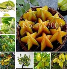 50PCS Carambola Seeds - 2 Types Available