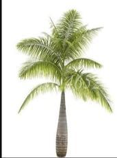 20PCS Bottle Palm Seeds - Green Color