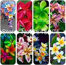 100PCS Garden Plumeria Seeds - Mixed 8 Colors
