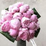 10PCS Chinese Peony Seeds - Light Pink Ball Flowers