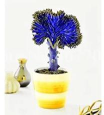 300PCS Spurge Fan-Shaped Succulent Seeds