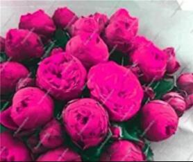 10PCS Chinese Peony Tree Seed - Rose Pink Double Flowers