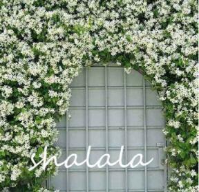 10PCS Trachelospermum Jasminoides Flower Seeds - White Flowers