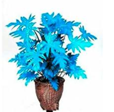 200PCS Philodendron Tree Seeds - Blue Hybrid F1