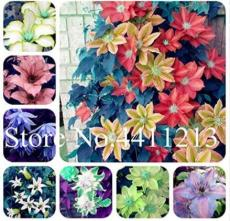 100PCS Climbing Clematis Seeds - Mixed White Blue Sunset White Colorful Flowers