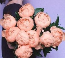 10PCS Chinese Peony Flowers Seeds - Light Orange Flowers