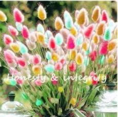 200PCS Rainbow Tails Grass Seeds
