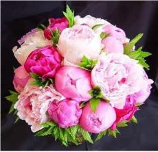 10PCS Chinese Peony Seeds - Mixed Rose Red Light Pink Whitish Pink Ball Flowers