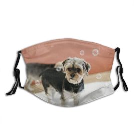 yanfind Idyllic Transparent Dog Dreamy Calm Friendly Yorkshire Cute Chordate Attentive Tranquil Bubble Dust Washable Reusable Filter and Reusable Mouth Warm Windproof Cotton Face