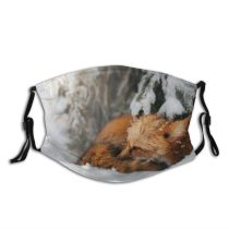 yanfind Poland Wild Fox Snow Wildlife Temperature Outdoors Winter Fur Portrait Dust Washable Reusable Filter and Reusable Mouth Warm Windproof Cotton Face