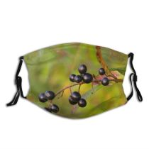 yanfind Plant Acorn Flower Croatia Huckleberry Tree Plant Berries Haw Woody Chokeberry Leaf Dust Washable Reusable Filter and Reusable Mouth Warm Windproof Cotton Face