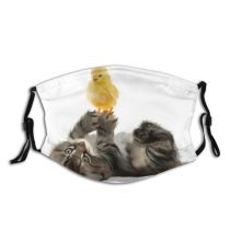 yanfind Isolated Farm Bird Young Cute Feather Kittens Easter Newborn Baby Pet Cats Dust Washable Reusable Filter and Reusable Mouth Warm Windproof Cotton Face