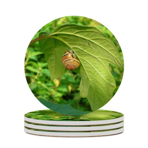 yanfind Ceramic Coasters (round) Snail Leaf Leaves Plant Flower Insect Organism Invertebrate Butterfly Flowering Family Game Intellectual Educational Game Jigsaw Puzzle Toy Set