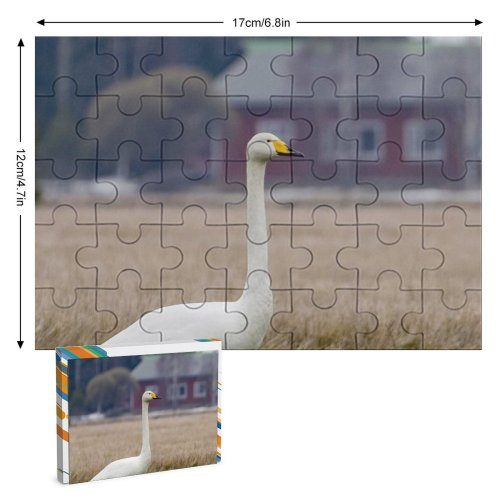 yanfind Picture Puzzle Whooper  Bird Field Winter Beak Grass Ducks Geese Swans Atmospheric Wildlife Family Game Intellectual Educational Game Jigsaw Puzzle Toy Set