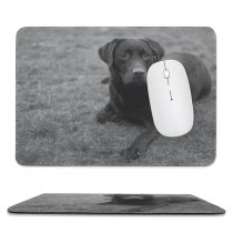 yanfind The Mouse Pad Dog Wildlife Free Wallpapers Helios Bw Images Pictures Bear Pet Grey Pattern Design Stitched Edges Suitable for home office game