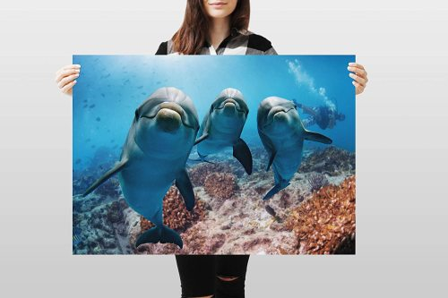 yanfind A1 | Dolphins Poster Art Print 60 x 90cm 180gsm Dolphin Scuba Diving
