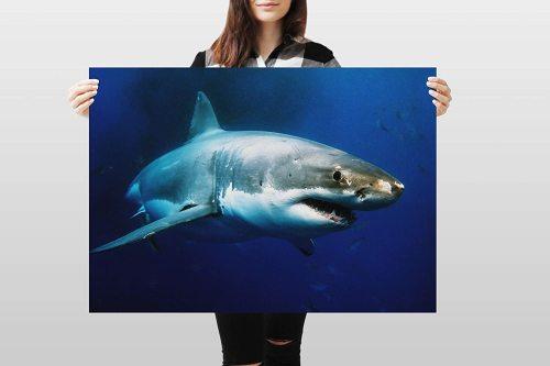 yanfind A1 | Great White Shark Poster Art Print 60 x 90cm 180gsm Surf Diving